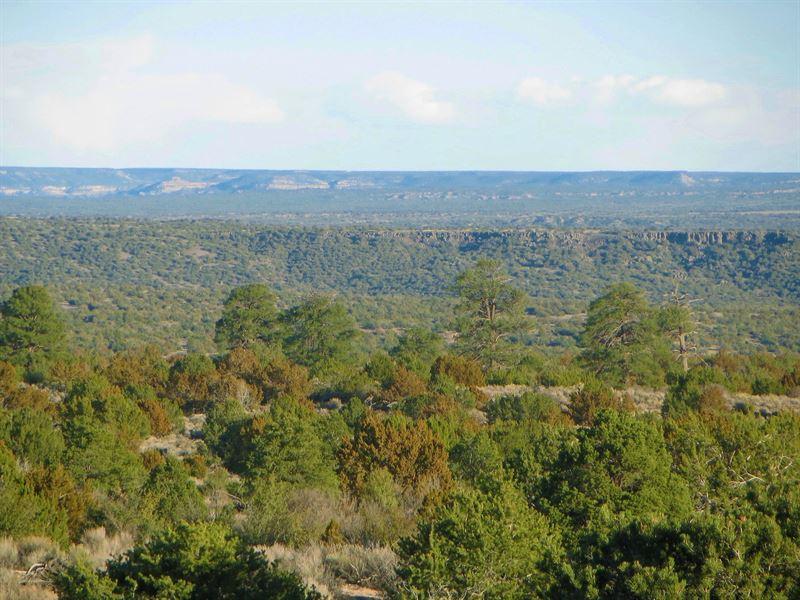 Ponderosa Pine Wooded Az Ranch : Saint Johns : Apache County : Arizona