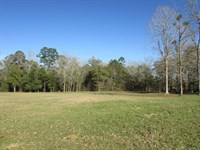 Little Creek Property : Pavo : Brooks County : Georgia
