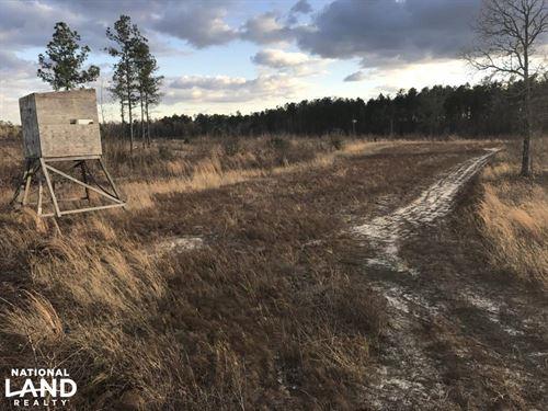 Barnwell Small Hunting & Future Tim : Barnwell County : South Carolina
