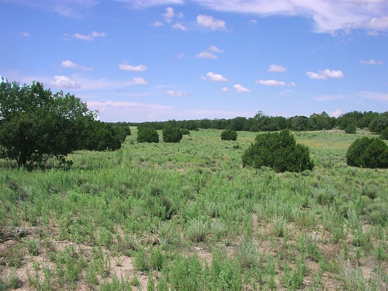 Remote Northern Az Ranch $237 Mo : Saint Johns : Apache County : Arizona
