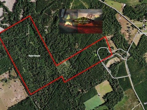 200 Ac - Timberland & Hunting : Roganville : Jasper County : Texas
