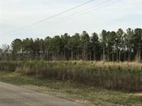 Buckhorn Old Farm : Banks : Pike County : Alabama