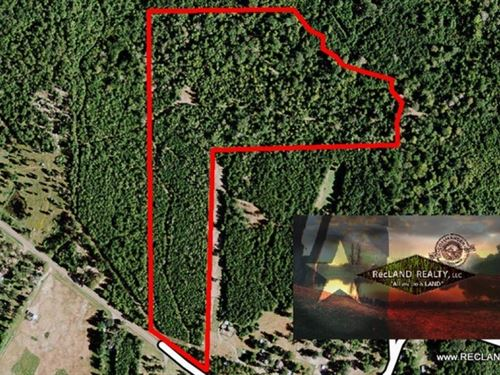 35.4 Ac - Timber Land For Home Site : Burkeville : Newton County : Texas