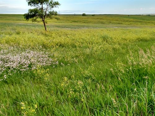 Good Productive Hardland Pasture : Farnam : Frontier County : Nebraska