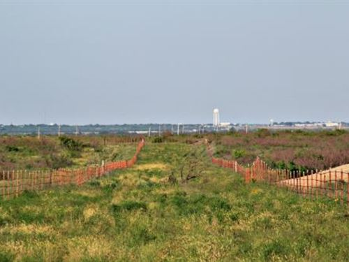 Cattle Ranch Auction - 903 Acres : Electra : Wichita County : Texas