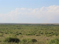 Cattle Ranch Auction - 1480 Acres : Electra : Wichita County : Texas