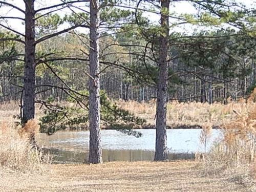 143.5 Acres In Rankin County Known : Brandon : Rankin County : Mississippi