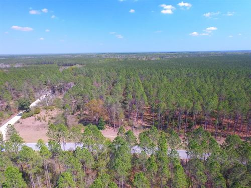 37.58 Acre Timber Plantation : Jesup : Wayne County : Georgia