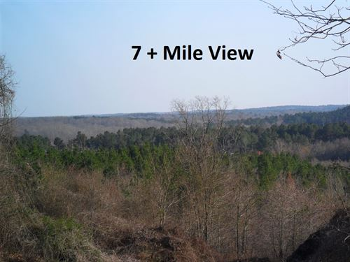 81.2 Acres, Land With Old Cabin : Ashland : Benton County : Mississippi