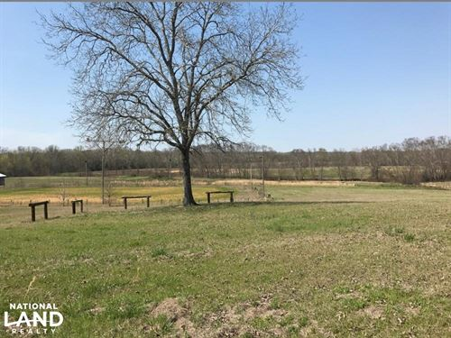 Buttahatchee River Horse Farm : Beaverton : Lamar County : Alabama