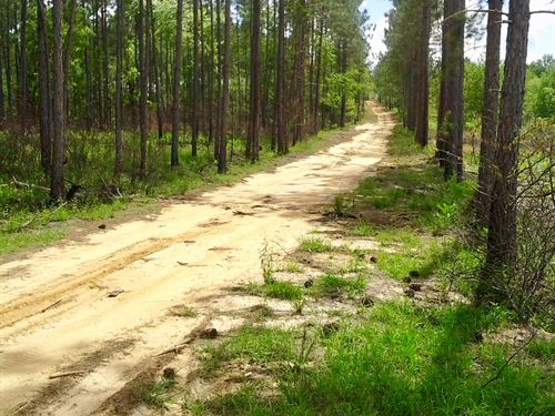 Land For Sale, Ben Hill Co Hunting : Fitzgerald : Ben Hill County : Georgia