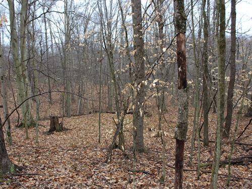 Davis Chapel Rd - 5.003 Acres : Logan : Hocking County : Ohio