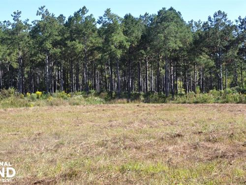 Upper Big Black River 592 Acres : Europa : Webster County : Mississippi