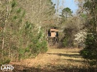 175 Acre Timberland & Hunting Pr : Rolla : Hot Spring County : Arkansas