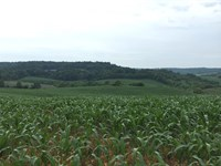 Farmland Parcel 59+/- Acres : Hillsboro : Vernon County : Wisconsin