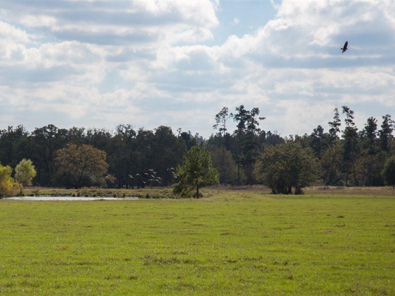 262 Ac Fm 3179 : Huntsville : Walker County : Texas