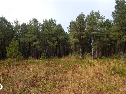 North carolina pine trees farms for sale farmflip Pine tree timber