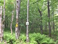 Osceola Camp Site : Osceola : Lewis County : New York