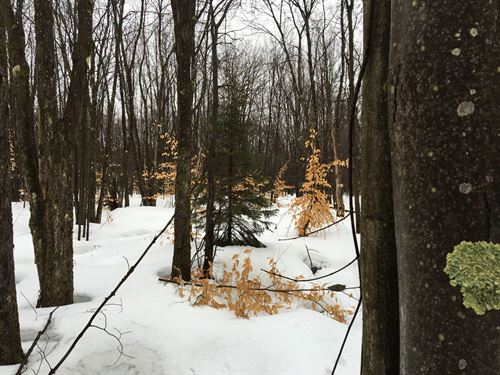Osceola Forestlands : Osceola : Lewis County : New York