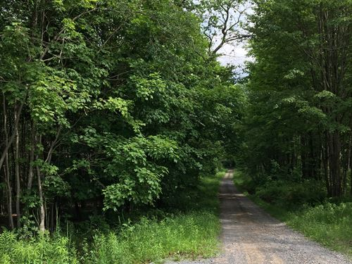 Borders East Osceola State Forest : Osceola : Lewis County : New York