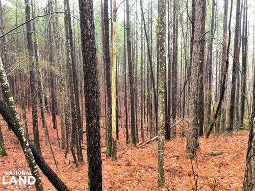 New River Timber Investment : Brilliant : Marion County : Alabama