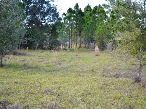 Deep Creek 21 : Arcadia : De Soto County : Florida
