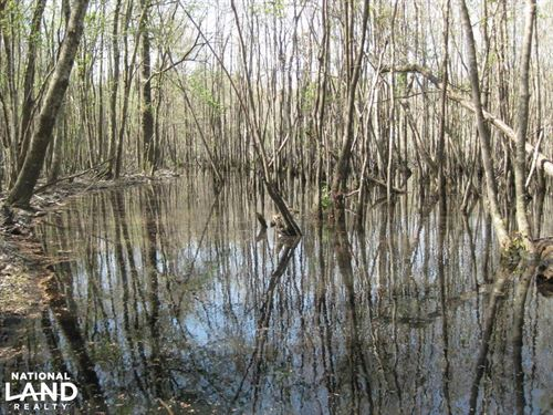 Lynches River Farming And Hunting : Lamar : Darlington County : South Carolina
