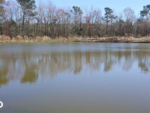 Homesite And Hog Farm Opportunity : Willard : Pender County : North Carolina