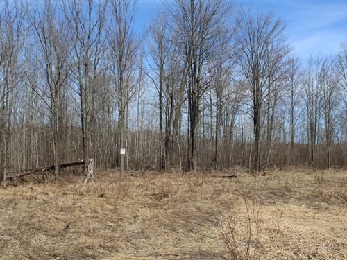 Affordable 40 Acre Parcel : Medford : Taylor County : Wisconsin