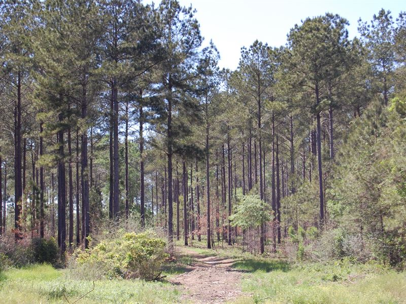 Doerun Timber : Doerun : Colquitt County : Georgia