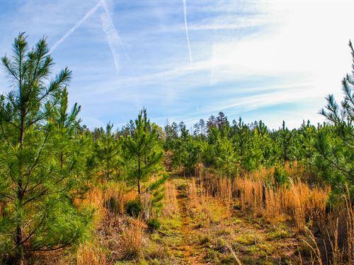 46 Acre Recreational/Timber Tract : Buffalo : Union County : South Carolina