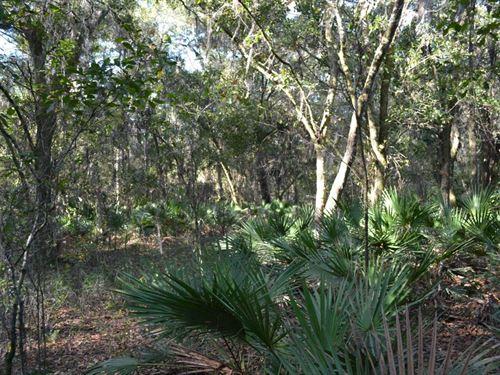 Two Mile Prairie : Hernando : Citrus County : Florida