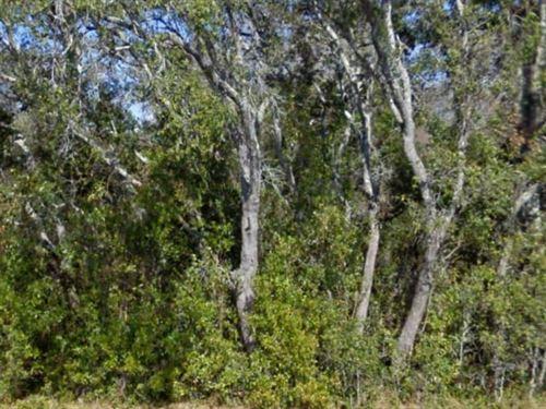 Levy, Florida $70,000 Neg : Morriston : Levy County : Florida
