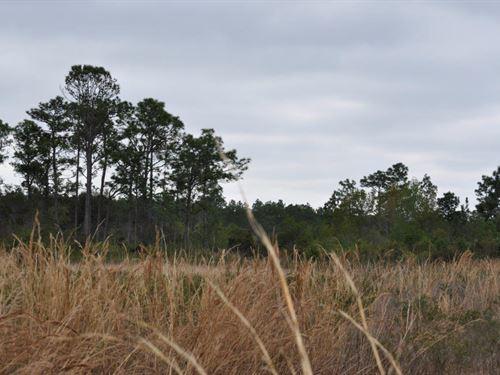 Annutteliga Hammock Tract 3 : Weeki Wachee : Hernando County : Florida
