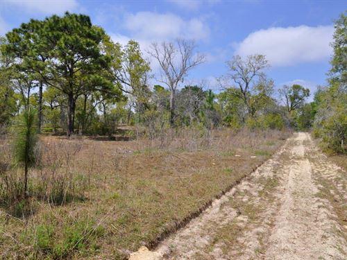 Annutteliga Hammock Tract 2 : Weeki Wachee : Hernando County : Florida