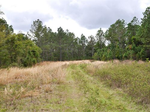 Green Swamp Preserve 6 : Groveland : Lake County : Florida