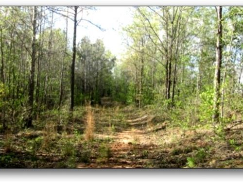 136 Acres In Choctaw County : Ackerman : Choctaw County : Mississippi