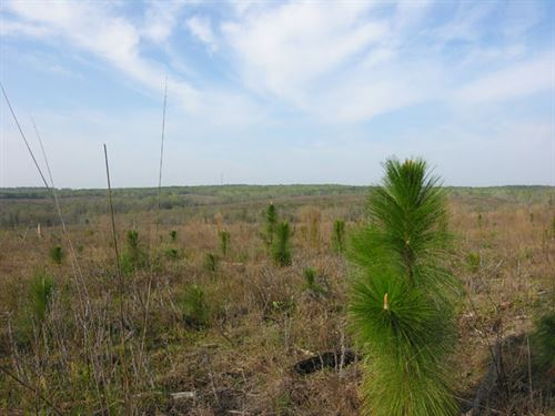 529.104 Acres Planted Pines : Richland : Stewart County : Georgia