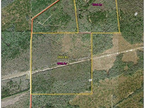 260 Acres From Linscomb Road : Mauriceville : Orange County : Texas