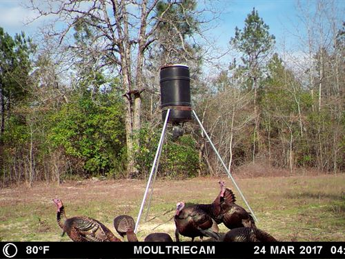Turkey Haven : Butler : Taylor County : Georgia