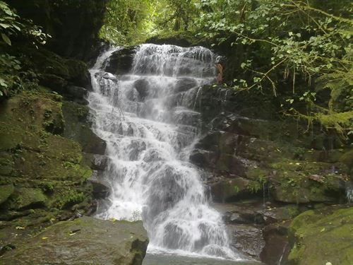 Waterfalls, 7 Ac Jungle, Woods, Pas : Pejibaye De Turrialba : Costa Rica