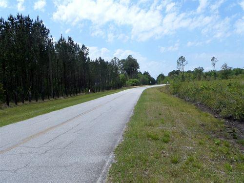 12+ Acres In Little Creek Area : Jesup : Wayne County : Georgia