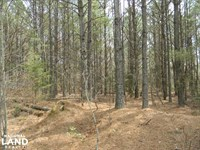 Mud Tavern Creek Hunting & Timber : Danville : Morgan County : Alabama