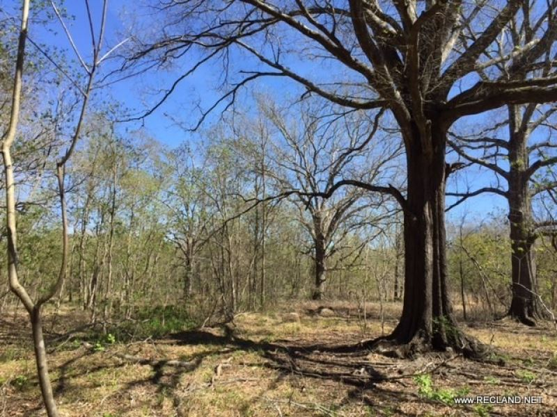 20 Ac Wooded Tract For Home Site : Deville : Rapides Parish : Louisiana