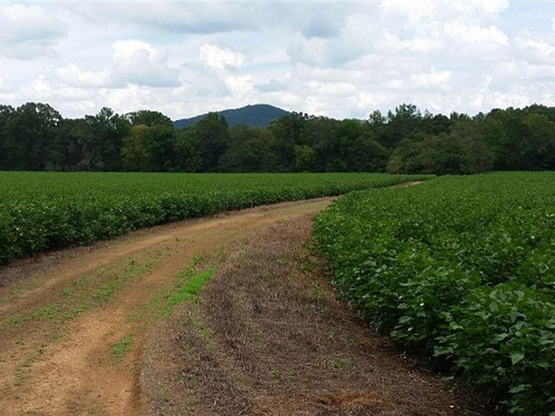 77+/- Acres Cropland : Sylacauga : Talladega County : Alabama