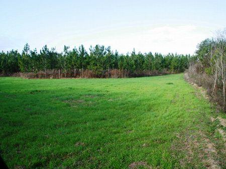 Dry Creek Farm : Albany : Worth County : Georgia