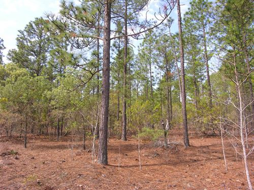 62.6 Acres And 112 Acres Wooded : Mauk : Taylor County : Georgia