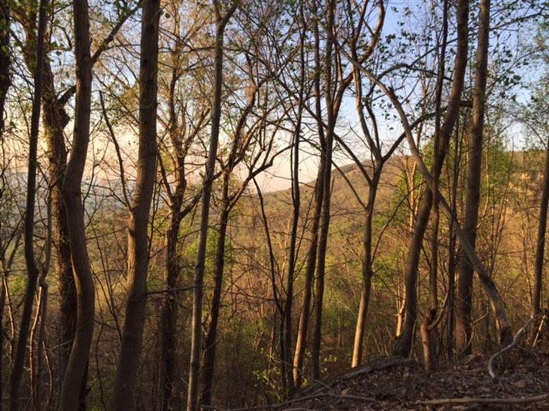 8.09+/- Acres Near Prentice Cooper : Whitwell : Marion County : Tennessee