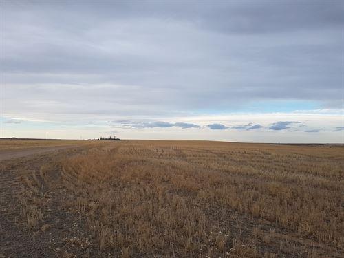 Adams County Dryland : Strasburg : Adams County : Colorado