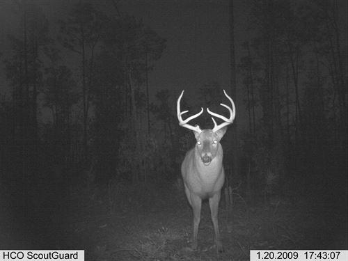 Turkey Ridge : Marianna : Jackson County : Florida